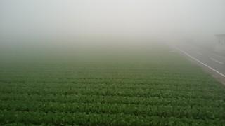 日田の底霧を紹介します