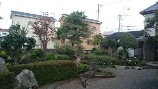 うきは市吉井町のT邸の剪定作業をしました
